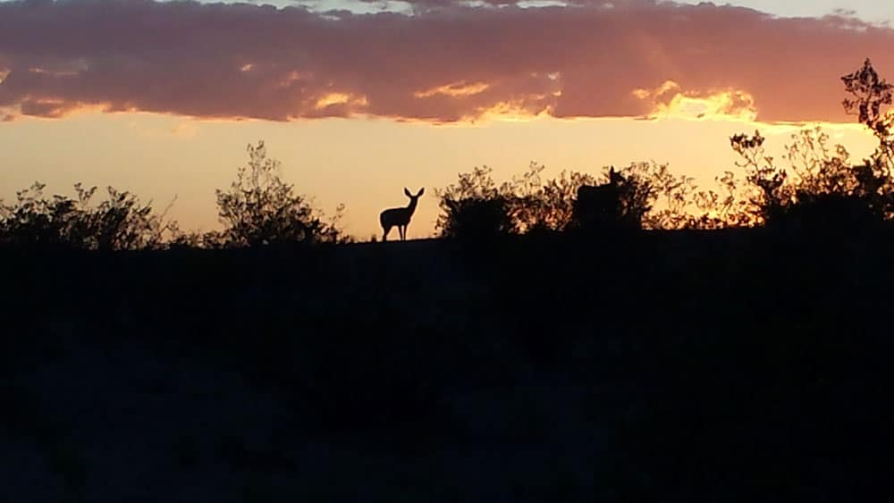 deer on a hill at sunset, 2015